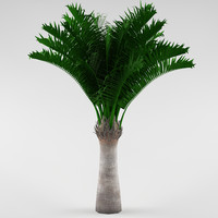 Palm_04