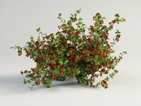 3d bush shrub model