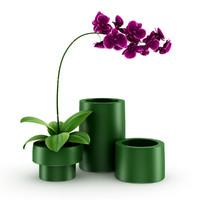3d purple orchid