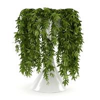 3d model plant climb
