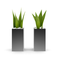 3d model double aloe plant