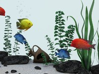 aquarium fish tropical 3d model
