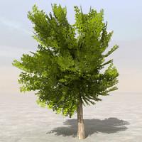 3dsmax tree afghanistan 07