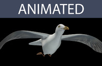 seagull flying 3d model