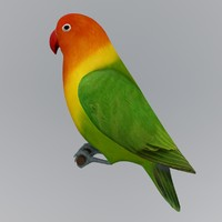 lovebird bird 3d model