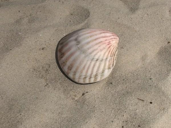 seashell_v5_render.jpg