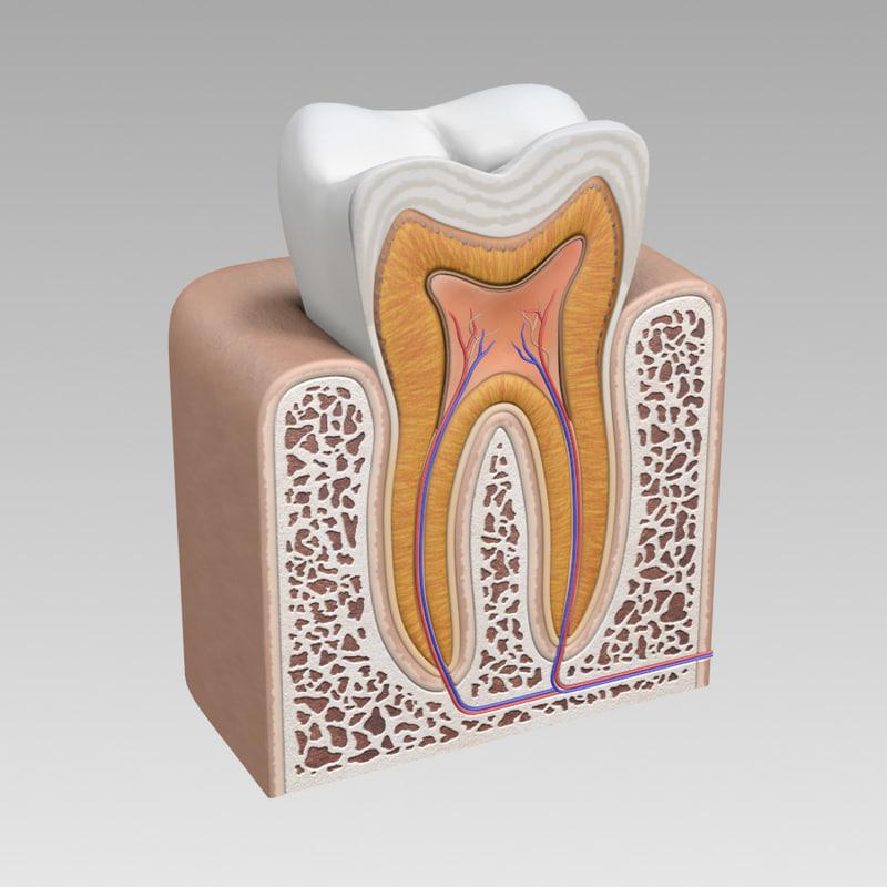 tooth_1.jpg