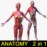 3d human male female body