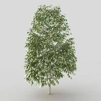 maya tree