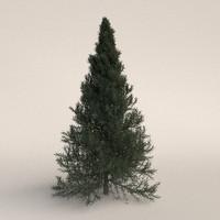 fir tree 3d blend