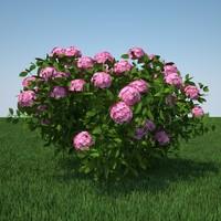 3d hydrangea macrophylla