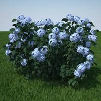 3d model hydrangea serrata