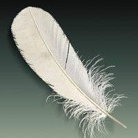 maya realistic bird feather