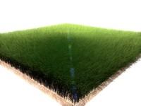 Dynamic Grass