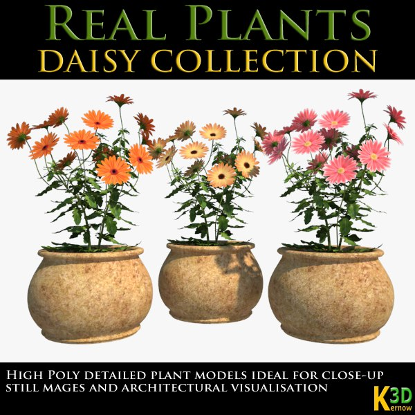 RealPlants_DaisyCollection_signature.png