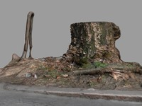 Tree stump near street