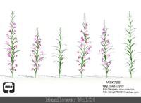 3d hd flowers model