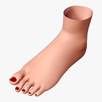 3d woman foot model