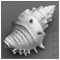 sea shell obj