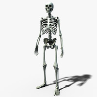 Skeleton Lowpoly
