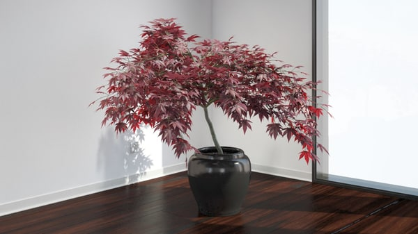 japanese maple max - VP Japanese Maple... by VIZPARK