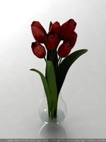 Tulips(1)