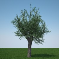 3d pollard willow tree model