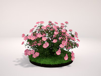 3d model plant groundcover rose