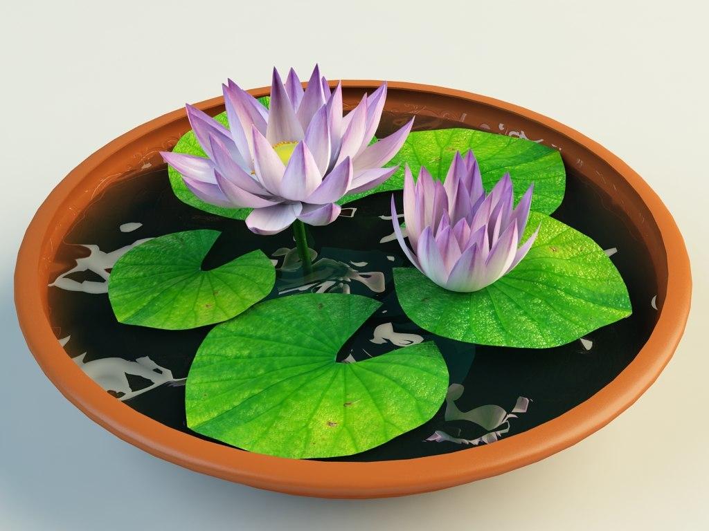 lotus_in_pot_4.jpg