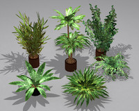 maya potted plants pack 7
