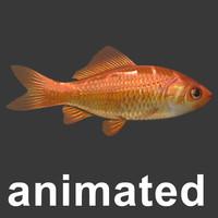 maya gold fish