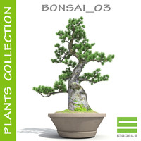 3d bonsai s tree