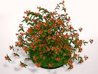 plant tangerine 3ds