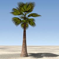 Palm Tree 04