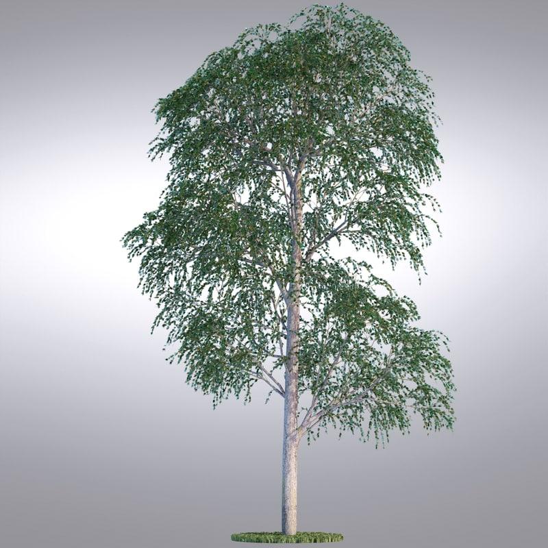 tree06_0001.jpg