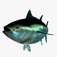 Giant Bluefin Tuna