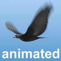bird flock animation 3d model