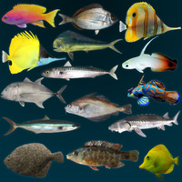 3d model marine fish anthias bream