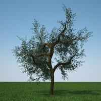 olive tree c4d