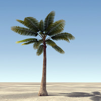 palm tree 3ds