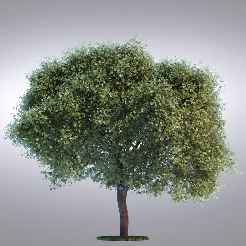tree100_0001.jpg