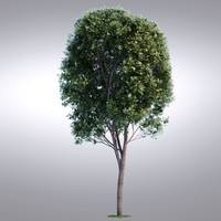 HI Realistic Series Tree - 018