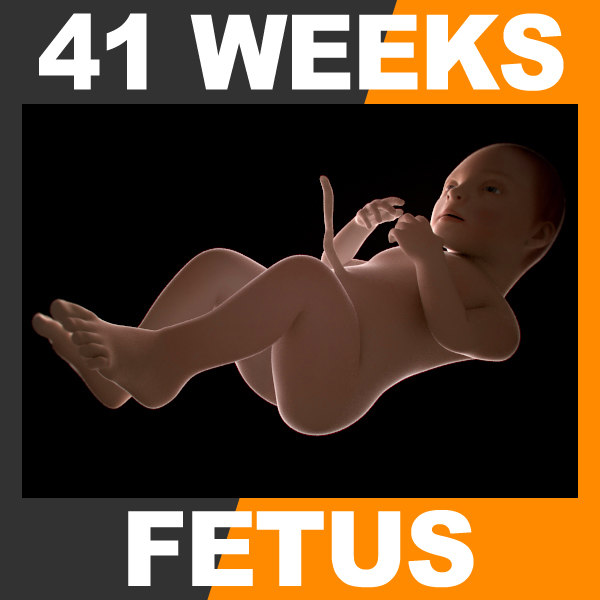 Fetus41W_th001.jpg