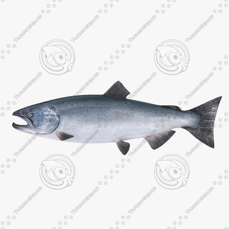 salmon01.jpg