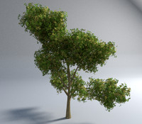 realistic tree sample garden obj free