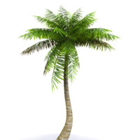 palms tree 3d model