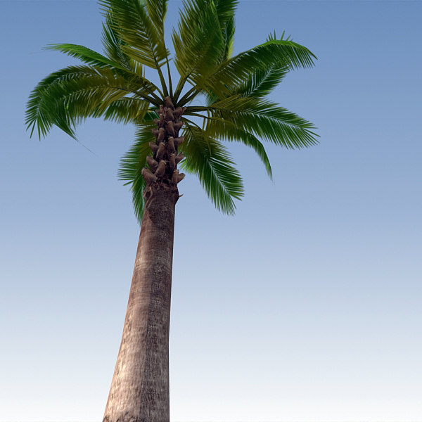 3d palm tree model - Palm Tree 03... by BlueGreen