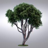 3d max hi realistic series tree
