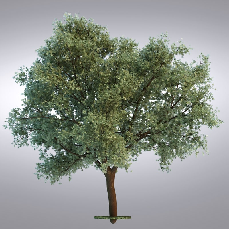 tree97_0001.jpg