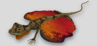 flying lizard 3d model